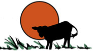 Akaushi cattle logo illustration for Broken Winds Cattle Company and Comanche Cattle Company